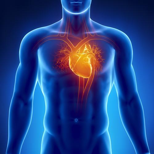 Сердце, сосуды, головной мозг, давление